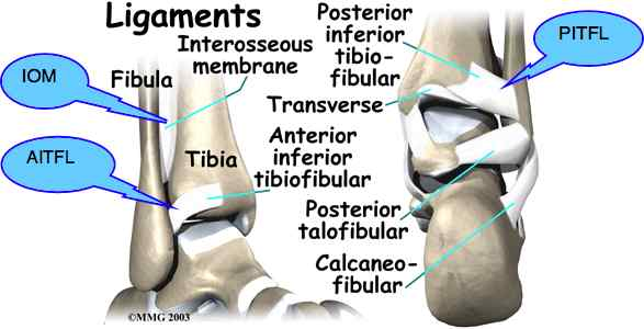 Ankle fracture ligaments.