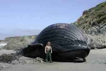 Beached whale.
