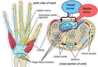 The carpal tunnel.
