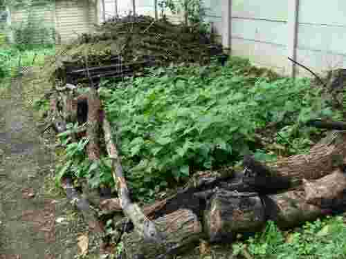 Compost heap for green beans.