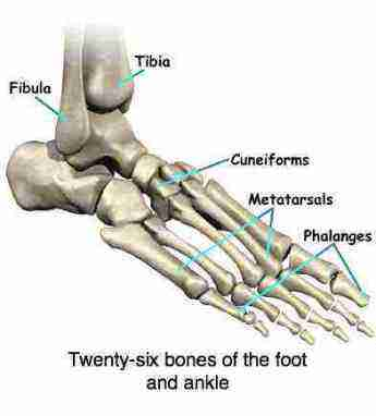 sprained ankle affects everyone; untreated you may develop chronic, Human Body