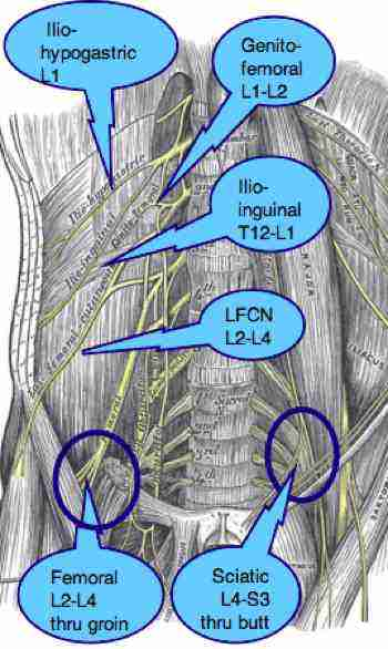Femoral Nerve on kidney pain referral pattern
