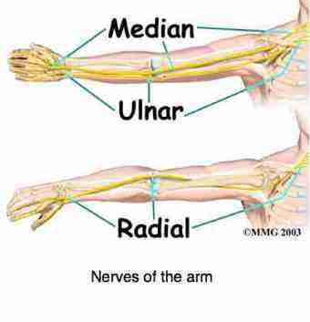 upper limb tension test is for arm pain; is it caused by a pinched, Muscles