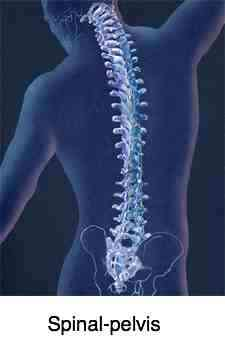 Chiropractic help is largely about the spine and pelvis.