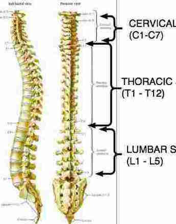 thoracic spine pain is rarely serious but frequently very irritating., Human Body