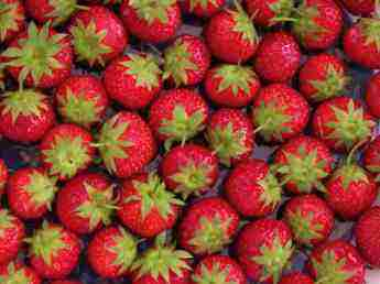 Interesting facts about strawberries include noteworthy for Interesting facts about strawberries