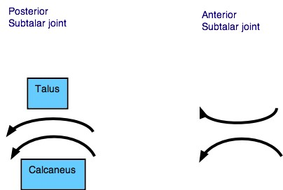 Subtalar convex concave