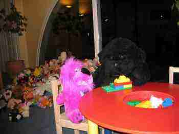 Teddybears' picnic at the chiropractic clinic