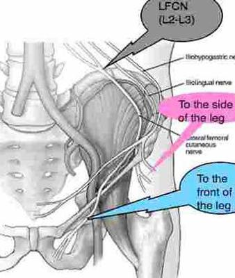 femoral nerve impingement or torn adductor muscles?, Muscles