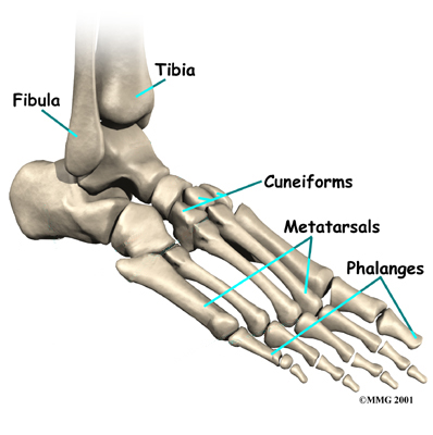 joints and points Bones, Muscles, and Joints - KidsHealth