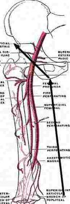 Pain In My Lower Inferior Pubic Rami