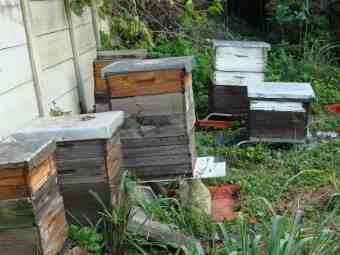 Beehives in autumn keep Bernie enthralled.