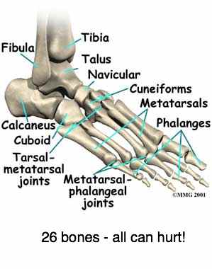 Graphic of the 26 bones of the foot and ankle all of which can cause joint pain.