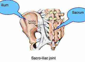 Sacroiliac joint often injured in horse falls