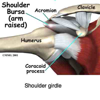 Rotator Cuff Consists Of Four Muscles That Can Make Your