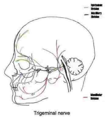 TMJ exercises gives all you need to know if you have jaw joint and ...