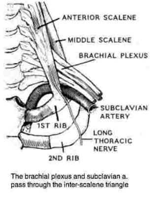 In TOS, both the artery and the brachial plexus of nerves are affected.